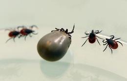 Ca lây nhiễm virus SFTS từ động vật sang người đầu tiên trên thế giới