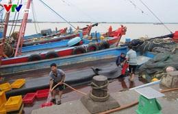 Bất chấp lệnh cấm ngư dân Hà Tĩnh vẫn ra khơi đánh bắt