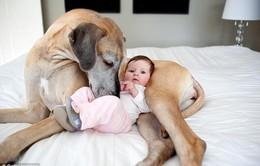 Nuôi chó giúp chủ nhà bớt béo phì và ít mắc các bệnh dị ứng
