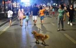 Ngày đầu ra quân xử phạt hành chính hành vi chó không rọ mõm ở TP.HCM
