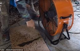 Dùng chó cưng làm mồi và 2 chiếc quạt, tiêu diệt 4.000 con muỗi mỗi đêm