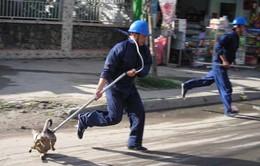 Hôm nay, quy định bắt chó thả rông có hiệu lực