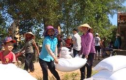 Bình Định hỗ trợ 45kg gạo/sào cho người dân có ruộng bị bỏ hoang