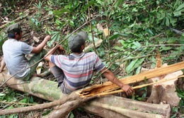 Tổng cục Lâm nghiệp sẽ thanh tra việc chuyển đổi đất rừng ở Phú Yên