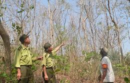 Khánh Hòa: Tăng cường phòng chống cháy rừng tại huyện Khánh Vĩnh