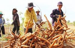 Ninh Thuận: Hỗ trợ đất ở, đất sản xuất cho hộ dân tộc thiểu số