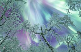 Ngỡ ngàng trước vẻ đẹp cổ tích của mùa đông Phần Lan