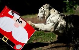 Ảnh ngộ nghĩnh các loài thú đón Giáng sinh trên khắp thế giới