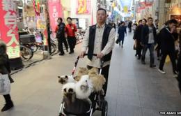 Nhật Bản: Người đàn ông 17 năm quảng bá vẻ đẹp của mèo