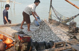 Bảo vệ nguồn lợi thủy sản từ chủ trương cấm khai thác cá linh non