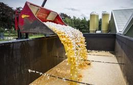 Hà Lan: Hàng triệu quả trứng nhiễm thuốc trừ sâu