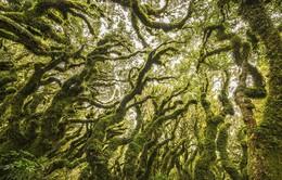 Khám phá những khu rừng kỳ bí nhất thế giới
