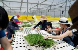 """""""Phủ xanh"""" mùa hè của các bé bằng trải nghiệm khó quên ở nông trại sạch"""