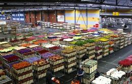 Đến thăm sàn đấu giá hoa Amsterdam, Hà Lan
