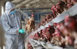 Cảnh giác với vi rút cúm A(H7N9) độc lực cao
