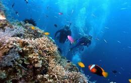 Khám phá vẻ đẹp dưới lòng đại dương tại đảo San Hô, Khánh Hòa