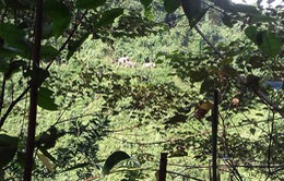 Quảng Nam lập kế hoạch bảo vệ đàn voi rừng