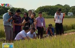 Cơ hội tăng cường hợp tác nông nghiệp trong khối APEC