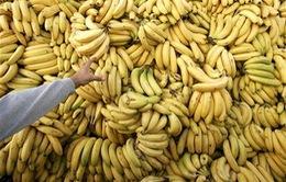 Phản đối quy định nhập khẩu, nông dân Argentina cho không 30 tấn chuối