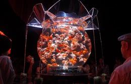 Tác phẩm nghệ thuật từ 8.000 con cá vàng tại Nhật Bản