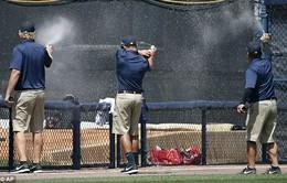 Hy hữu: Trận đấu bóng chày bị gián đoạn vì...ong!