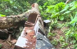 Chấn chỉnh việc chặt phá rừng trái phép ở Vườn quốc gia Ba Bể