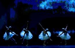 """Vở ballet """"Hồ thiên nga"""" chuẩn bị ra mắt khán giả Hà Nội"""