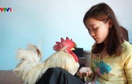 Cô gái Cần Thơ 5 năm làm bạn với chú gà trống