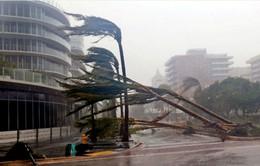 Bão Irma - Tâm điểm chú ý của sao tại Liên hoan phim quốc tế Toronto