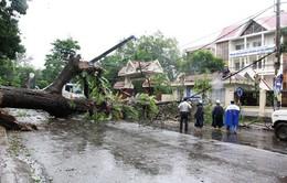 Mạnh nhất trong nhiều năm trở lại đây ở Nam Trung Bộ, bão số 12 gây thiệt hại lớn