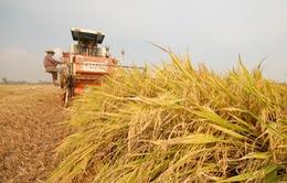 Mua bảo hiểm nông nghiệp có thể được hỗ trợ đến 90%