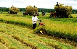 Chưa đến 1% số hộ nông thôn tham gia bảo hiểm nông nghiệp