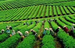 Bảo Lộc (Lâm Đồng) xây dựng đô thị nông nghiệp xanh