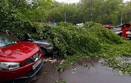 Cận cảnh hậu quả cuồng phong ở Nga khiến cây đổ đè chết nhiều người