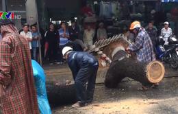Ảnh hưởng bão số 12, gió quật đổ nhiều bảng hiệu, cây cối ở Đà Nẵng