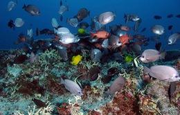 Mexico xây dựng khu bảo tồn sinh vật biển lớn nhất Bắc Mỹ