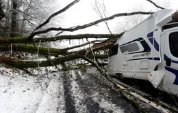 Bão tuyết cản trở giao thông tại châu Âu