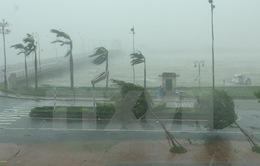 Quảng Bình: Nhiều cây xanh gãy đổ do bão số 10