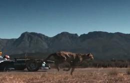 Xe đua công thức E đánh bại loài báo trong cuộc đua tốc độ