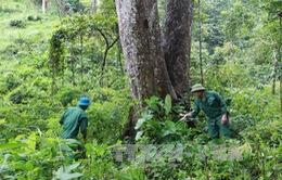 Cộng đồng quản lý, bảo vệ rừng bền vững