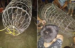 Hà Nội: Người dân bắt được cá sấu 30kg trên sông