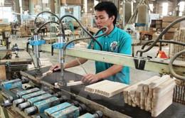 Xuất khẩu dăm gỗ gặp khó vì thuế tăng