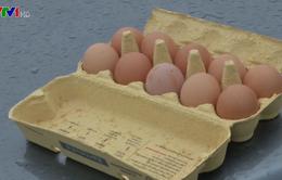 """Ủy ban châu Âu kêu gọi họp khẩn về bê bối trứng """"bẩn"""""""