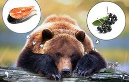 Gấu chuyển sang ăn trái cây do biến đổi khí hậu
