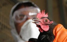 Trung Quốc: Tỉnh Tứ Xuyên phát hiện thêm 2 ca lây nhiễm virus H7N9