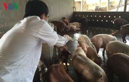 Bến Tre lập 3 đường dây nóng tiếp nhận thông tin tiêm thuốc vào gia súc