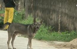 Phòng bệnh dại - Cần ý thức từ người nuôi chó