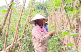 Tăng gia sản xuất, mang nguồn thực phẩm sạch cho người bệnh