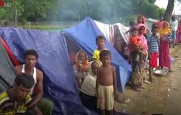 Anh hỗ trợ Bangladesh đối phó bệnh bạch hầu