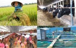 Năm 2018 sẽ triển khai thí điểm bảo hiểm nông nghiệp